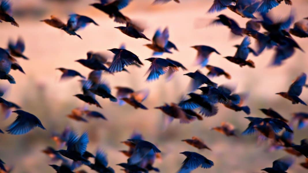 Swarm gains support for FIAT through Mercury FX