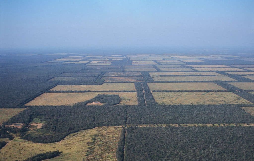 Paraguay Deforestation via Survival International - TreeCoin