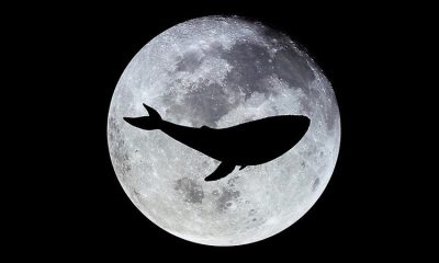 Moonwhale STO Now Live in US